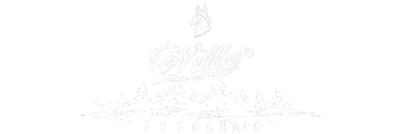 Willy Fotógrafo